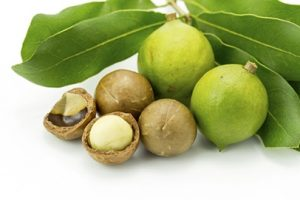 One high fat secret for endurance athletes macadamia nuts